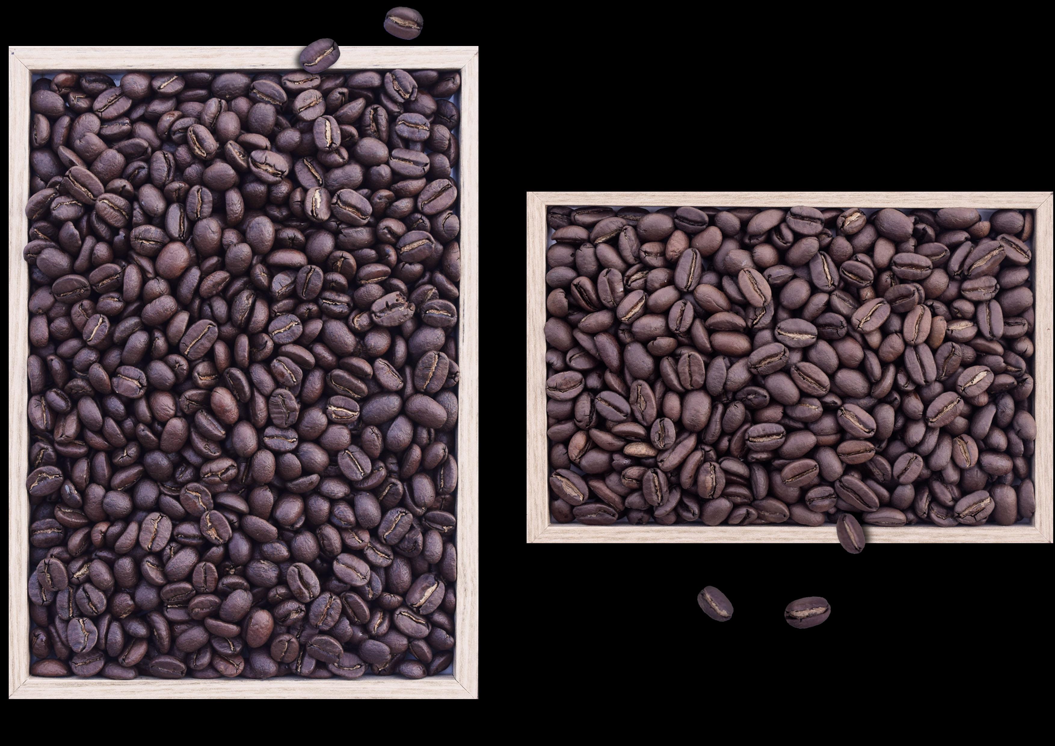 slow food guatemala etiopia perfero coffee